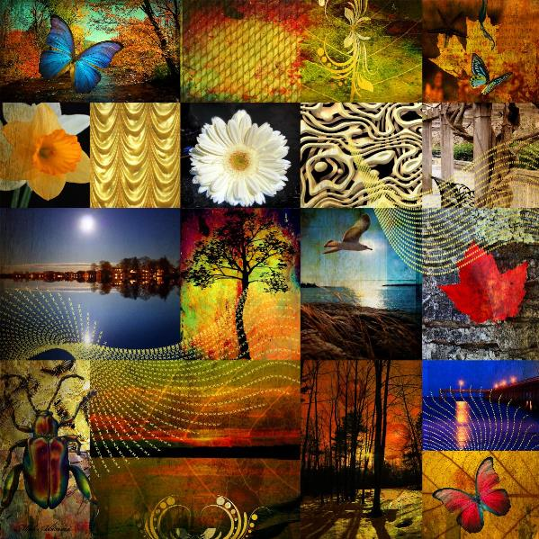 Collage From The Nature