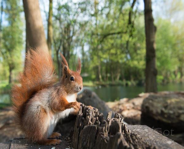 Squirrel By The Lake