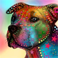 Pit Bull As Greeting Card