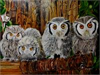 Family Of Owl