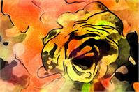 Orange Rose Abstract