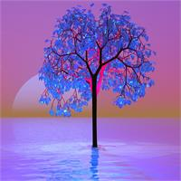 Tree Sunset As Greeting Card