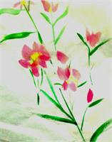 Oriental Pinks As Greeting Card
