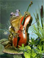 Frog Playing Cello In Lily Pond
