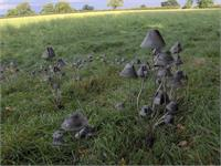Metal Mushrooms-shroom With A View-Stanger Moore Sculpture
