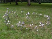Metal Mushrooms-Fairy Ring- Stanger Moore Sculpture