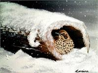 Bird In A Log In Snow As Greeting Card