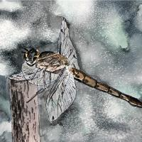 Dragonfly Painting Art Print