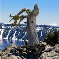 Crater Lake_ Little Bird On Dry 3