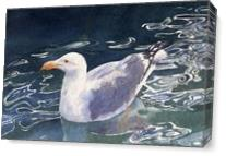 Seagull Floating As Canvas