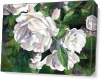 White Roses As Canvas