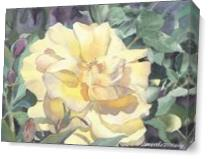 Yellow Rose As Canvas