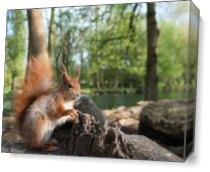 Squirrel By The Lake As Canvas