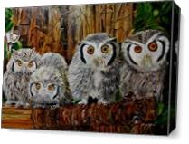 Family Of Owl As Canvas