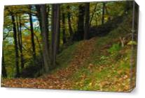Path In The Wood - Gallery Wrap Plus
